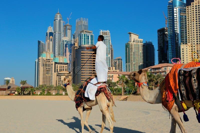 Arabski mężczyzna obsiadanie na wielbłądzie na plaży w Dubaj zdjęcia stock