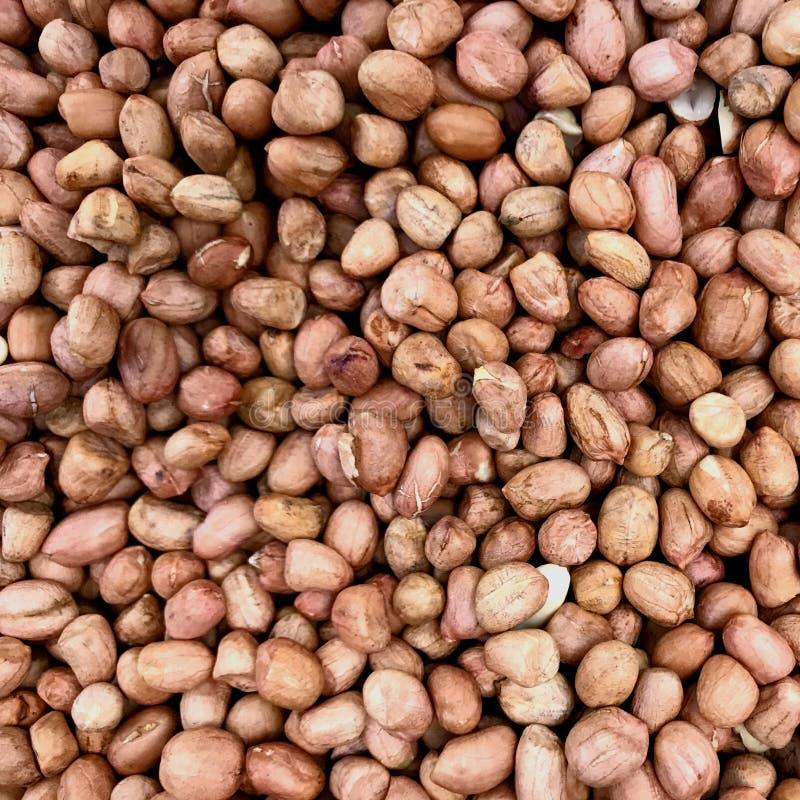 Arachid tekstury dla tła zdjęcia stock