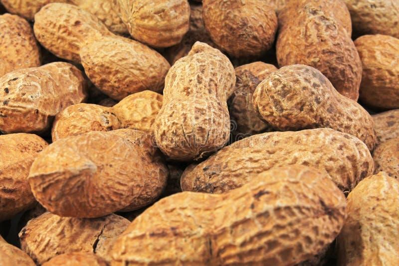 arachide Arachidi senza fotografia sbucciata dell'alimento del fondo degli shels in studio Chiuda sulla macro foto delle arachidi immagini stock libere da diritti