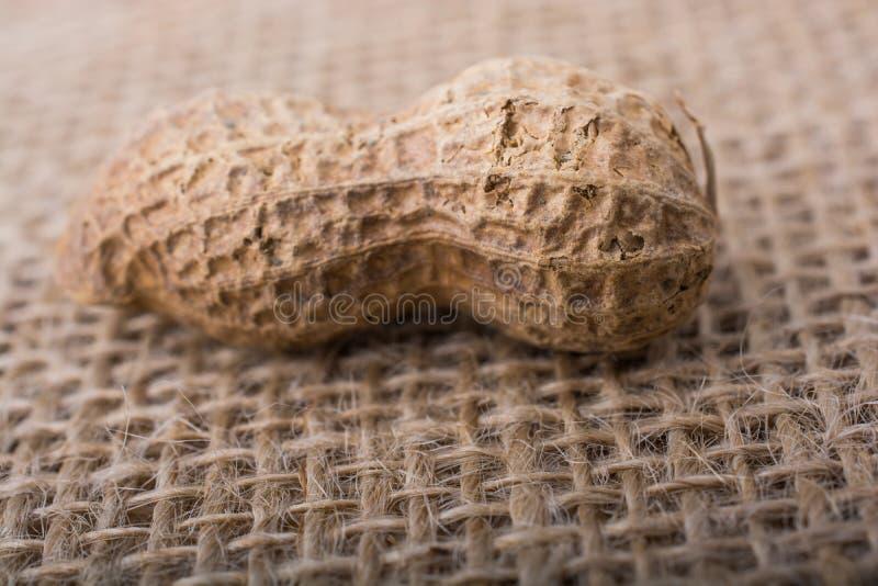 Download Arachide Avec La Coquille Sur Une Toile De Toile Photo stock - Image du noix, nutshell: 87701466