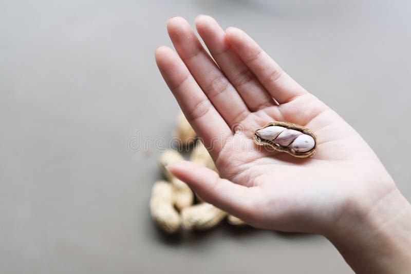 Arachide organica sulla mano fotografia stock