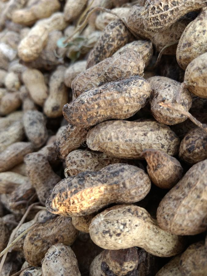 arachides photo libre de droits