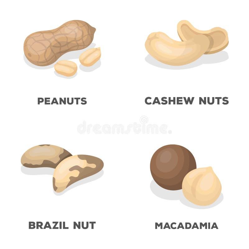 Arachides, anarcadiers, noix du brésil, macadamia Les différents genres d'icônes réglées de collection d'écrous dans le style de  illustration libre de droits
