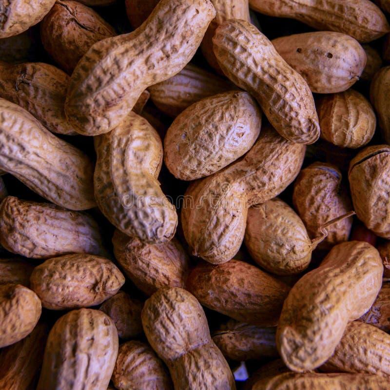 arachides crues brunes tirées pour la vente images libres de droits