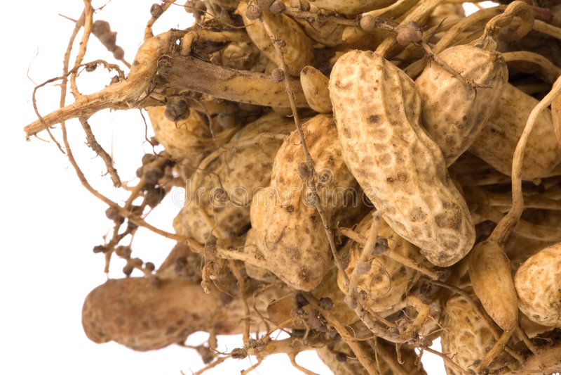 Arachides crues d'isolement photos libres de droits