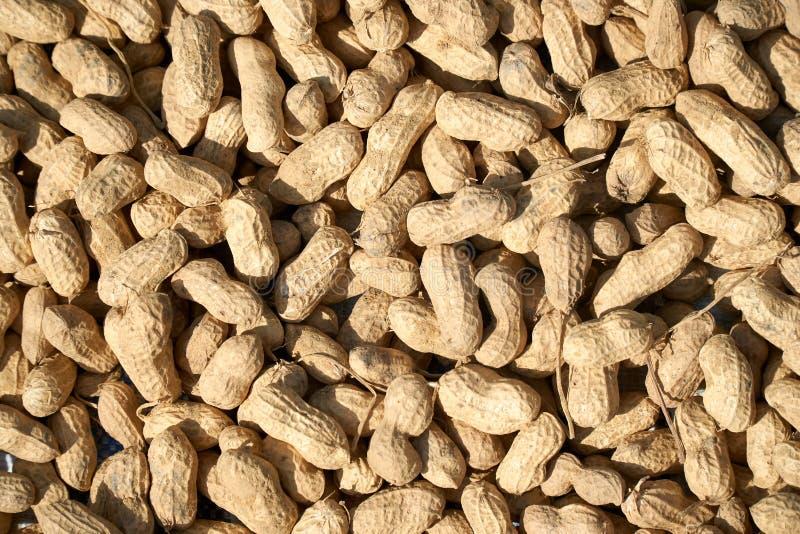 Arachidi nel fondo di struttura delle coperture Vista superiore delle arachidi crude ad un mercato del ` s dell'agricoltore fotografie stock libere da diritti