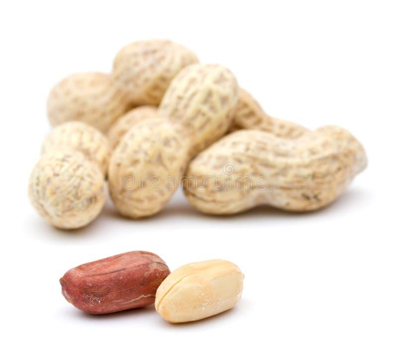 arachidy obrazy stock