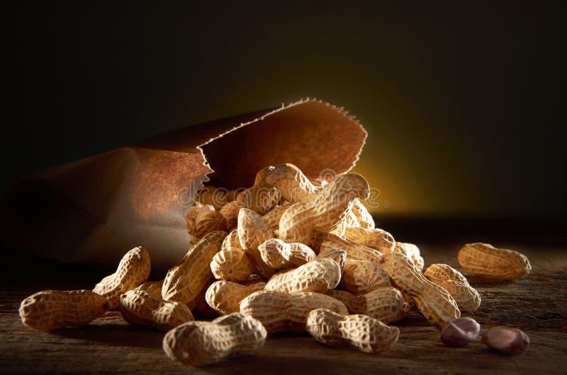 arachidy obraz stock