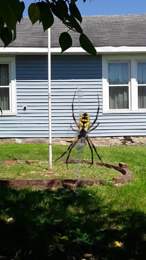 Arachnid fotos de stock royalty free