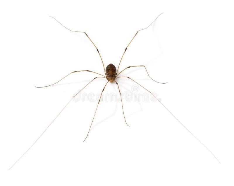 arachnid стоковое фото rf