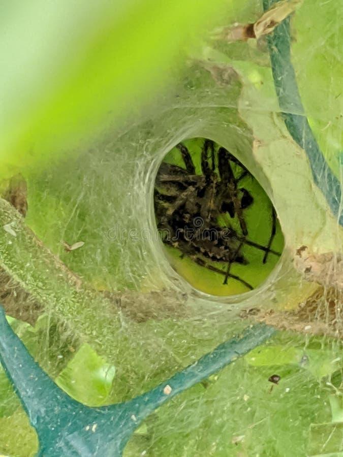 Arachnid Inn stockfotografie