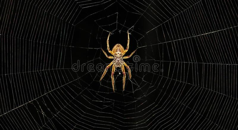 Arachnid, Spider, Spider Web, Invertebrate stock photos