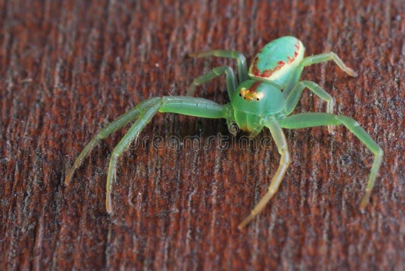 Arachnide au néon image libre de droits