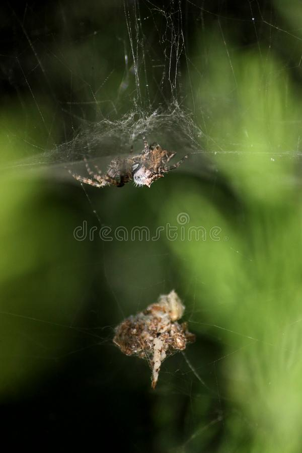 arachnophobia photo stock