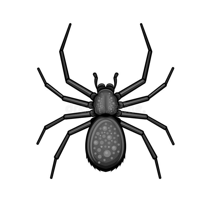 Aracnide nera del ragno su fondo bianco Vettore illustrazione di stock