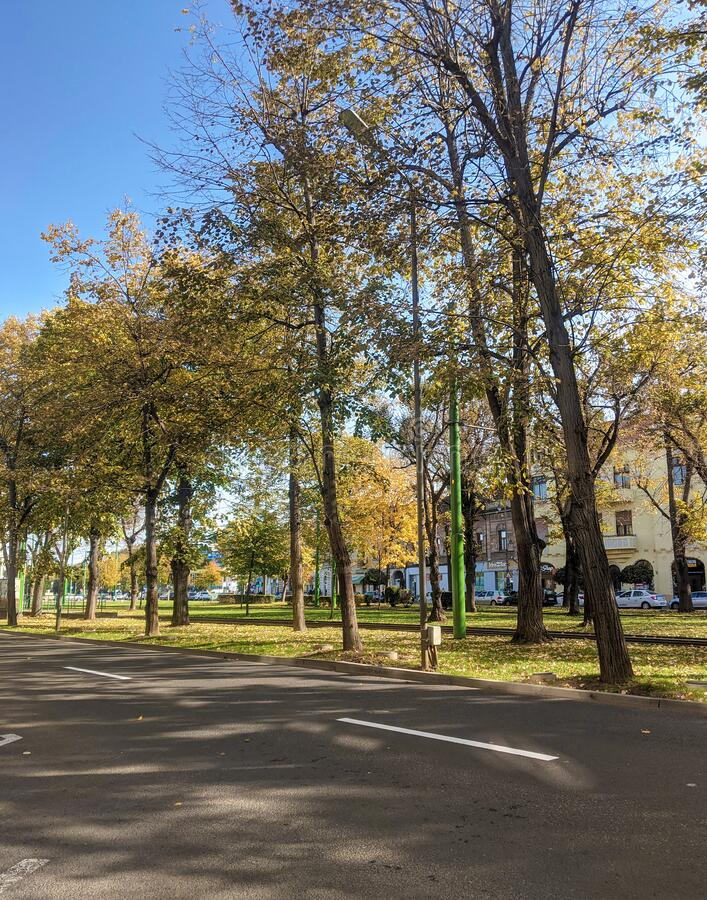 Free Arad City, Arad County - Romania - Trees On Revolution Boulevard Royalty Free Stock Images - 215837479