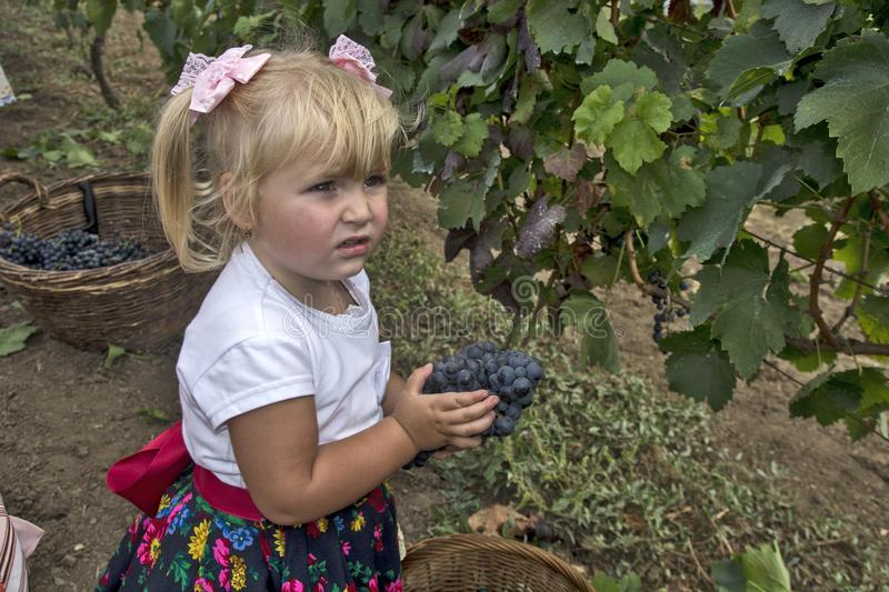 Little girl in celebration of grape harvest. ARADAC, SERBIA, September 07, 2019. Traditional celebration of the beginning of the grape harvest that takes place royalty free stock photography