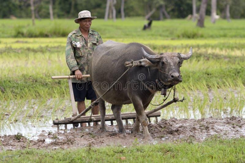 Arado con el búfalo de agua fotos de archivo