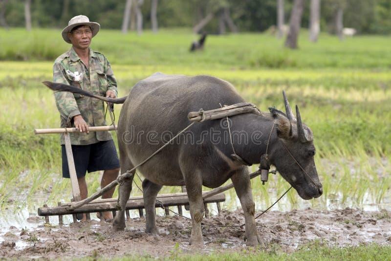 Arado con el búfalo de agua imagenes de archivo