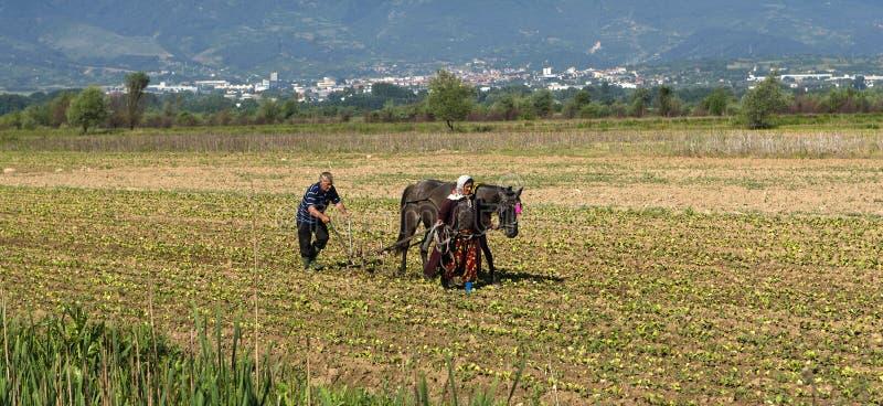 Arado del caballo fotos de archivo