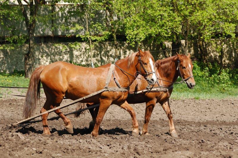 Arado del campo con los caballos fotos de archivo libres de regalías