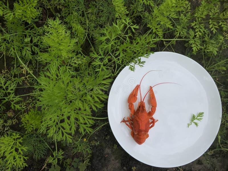 Aragosta rossa sul piatto immagine stock libera da diritti