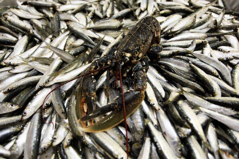Aragosta sul servizio di pesci fotografia stock libera da diritti