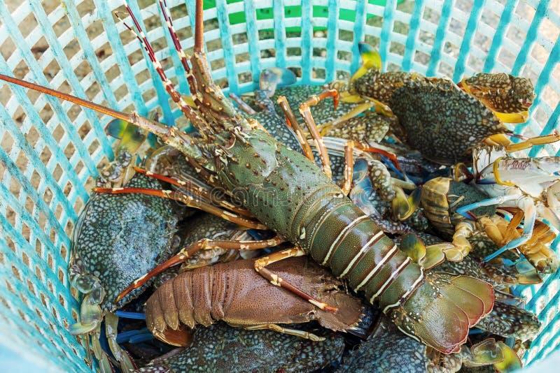 Aragosta viva con i granchi ed il gambero nel canestro, frutti di mare freschi dal mare fotografia stock libera da diritti