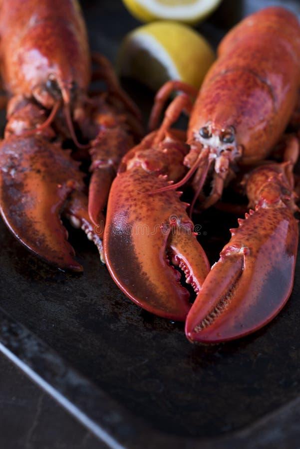 Aragoste dei frutti di mare con il limone Belle grandi aragoste fresche del mare fotografia stock