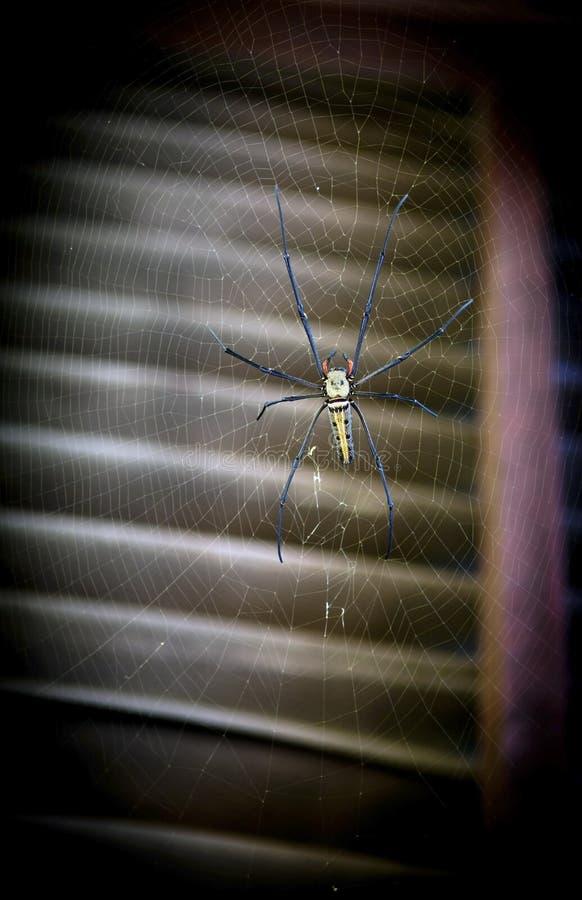 Araignée énorme photo stock