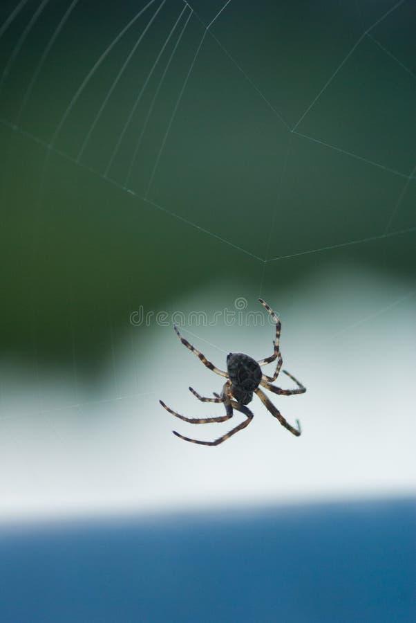 Araignée établissant un Web image stock