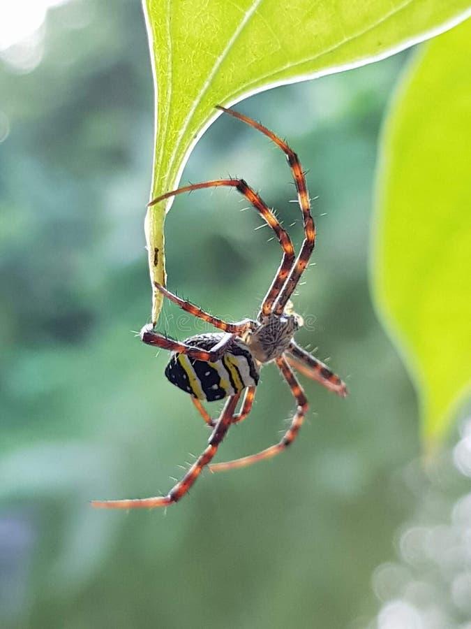 araignée image libre de droits
