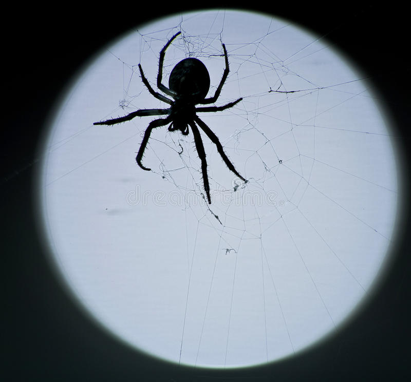 Araignée image stock