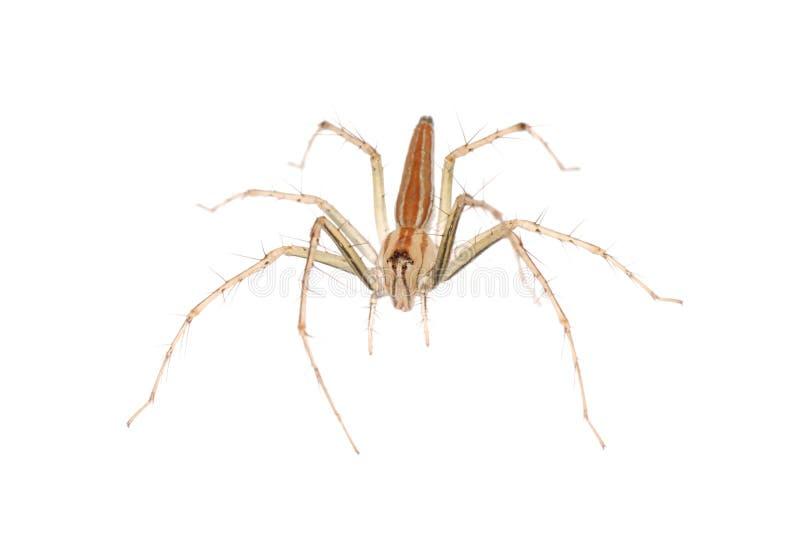 Araignée animale photographie stock