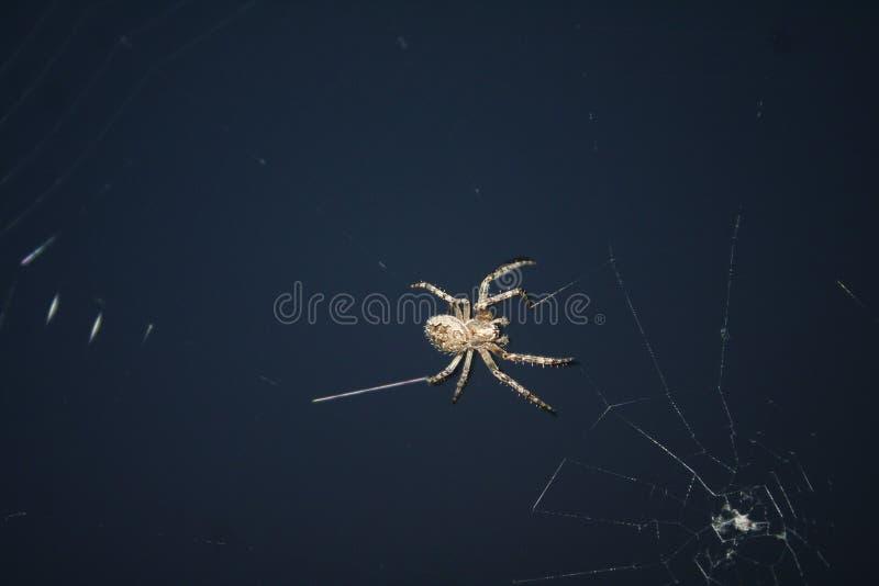 Araignée d'insectes de conception photo stock