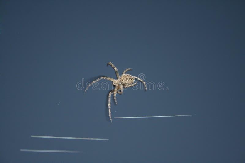 Araignée d'insectes de conception image stock
