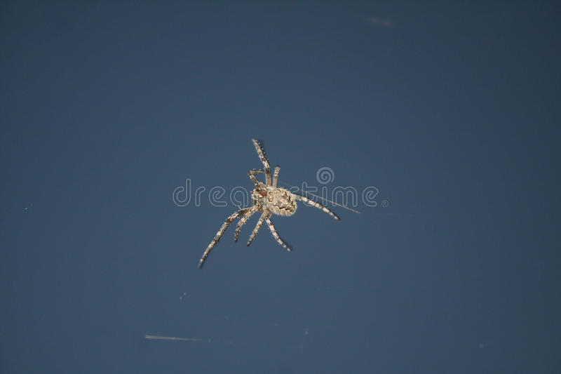 Araignée d'insectes de conception photographie stock libre de droits