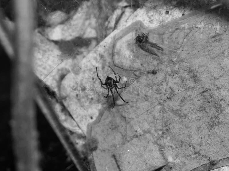 Araignée dans la maison photos stock