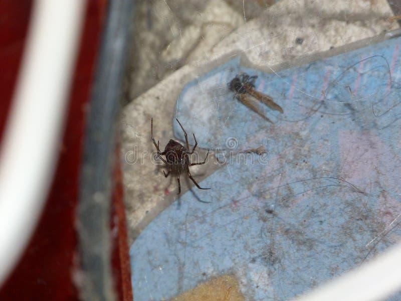Araignée dans la maison images stock