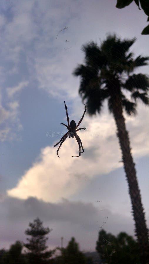 Araignée dans le ciel photos stock