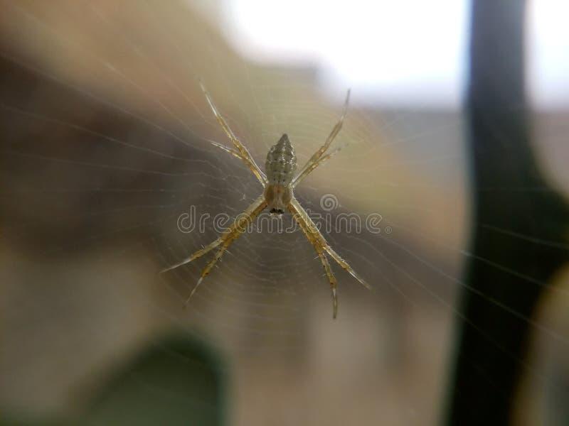 Araignée dans le jardin image stock
