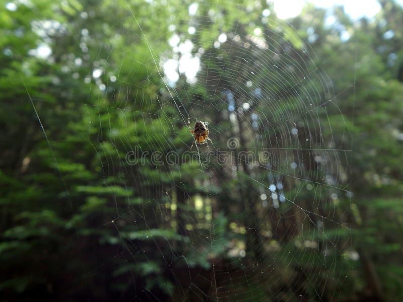 Araignée dans le réseau photographie stock