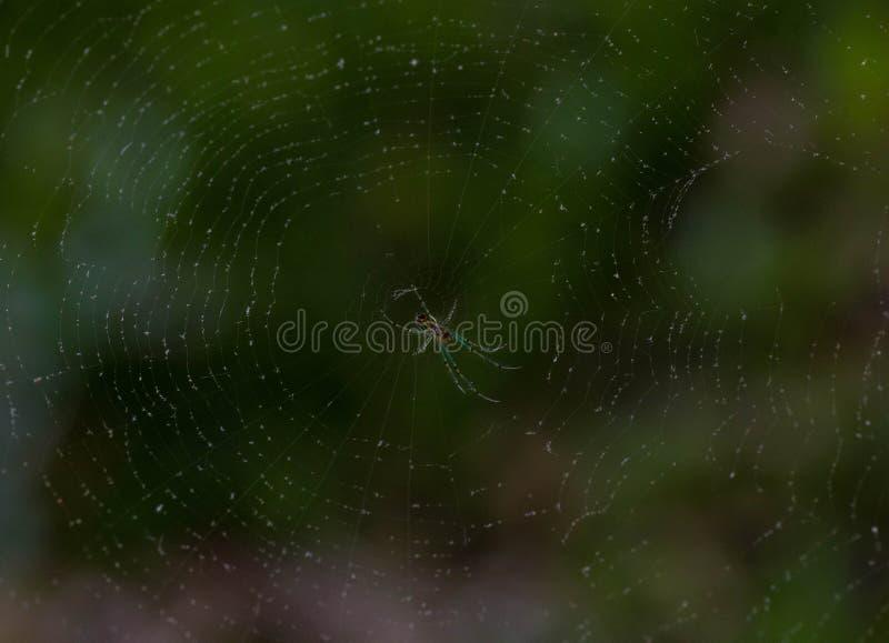 Araignée dans son Web images stock