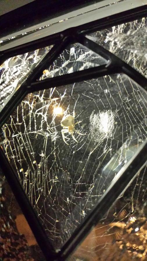 Araignée de bijou en dehors de la fenêtre photos libres de droits