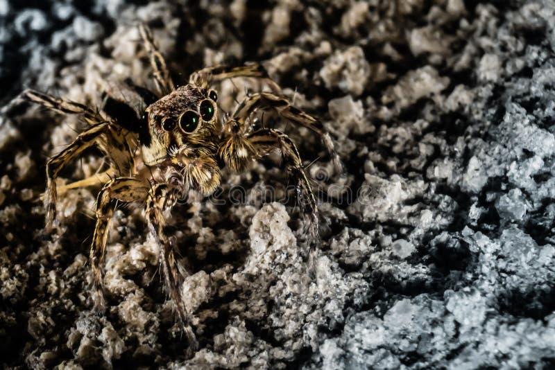 Araignée de camouflage image libre de droits
