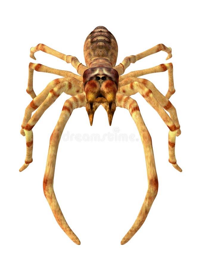 Araignée de chameau illustration stock
