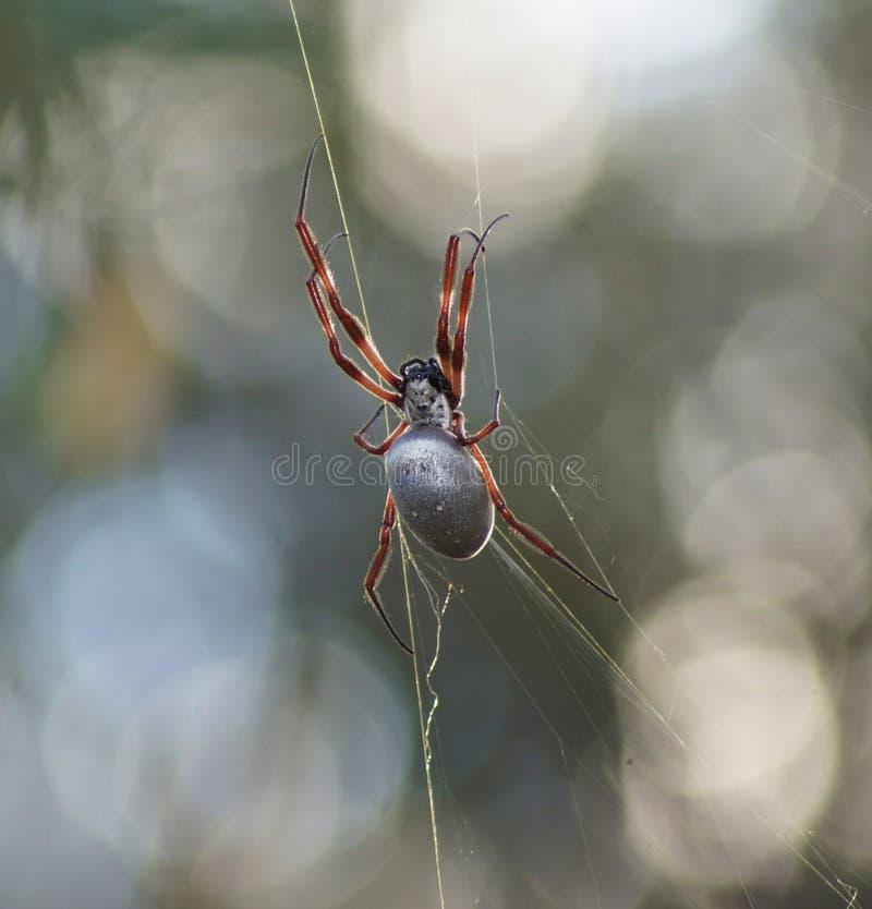 Araignée de globe image stock