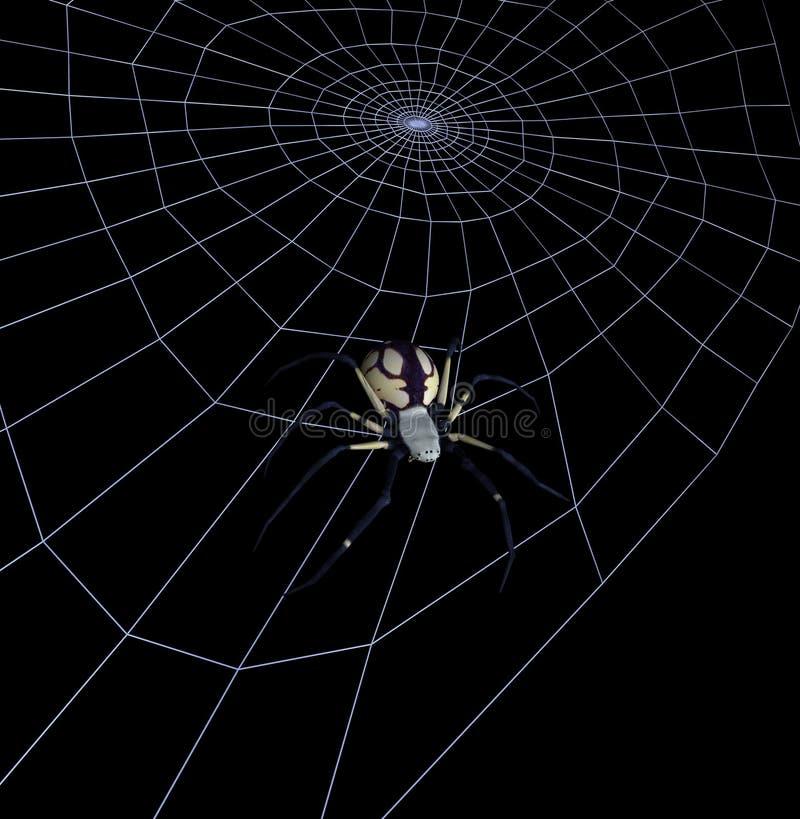 Araignée de jardin jaune noire sur le Web - comprend le chemin de découpage illustration de vecteur