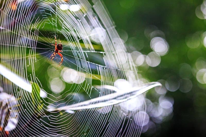Araignée de plan rapproché en grand Web photo libre de droits
