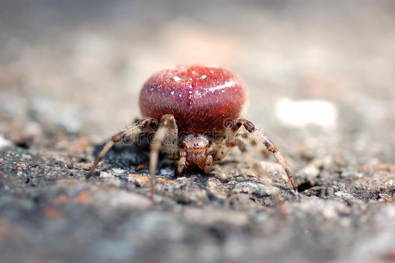 Araignée de potiron photos stock
